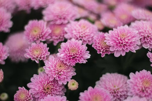 Ilmainen kuvapankkikuva tunnisteilla arranjo de flores, arranjo kukka, buquê de flores, flor rosa