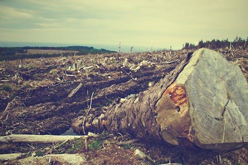 ağaç, alan, devrilmiş ağaç, düşmüş ağaç içeren Ücretsiz stok fotoğraf
