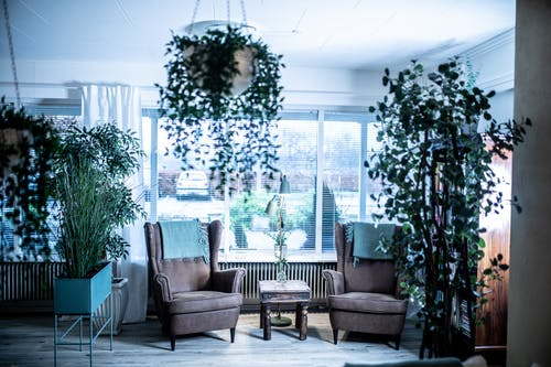 Chairs in bright room decorated with pot plants