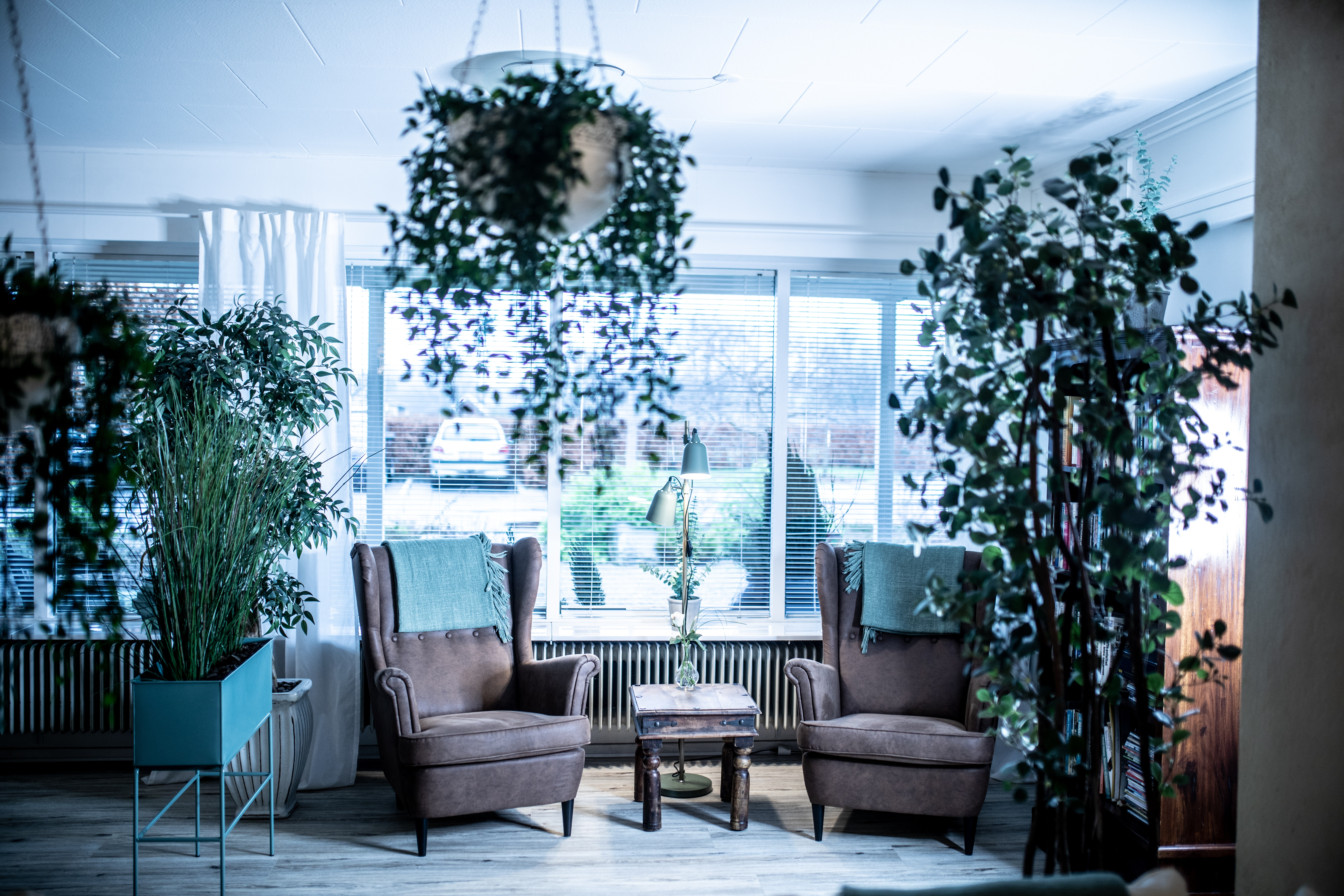 Chairs In Bright Room Decorated With Pot Plants Free Stock Photo