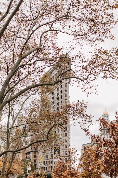 Bare Tree Near High Rise Building