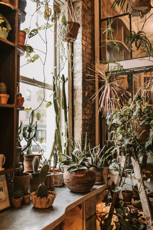 Potted plants near window in rural house