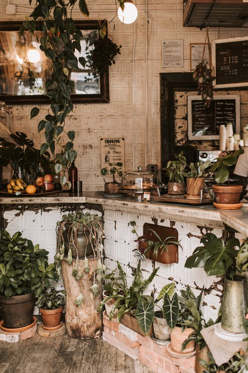 Interior design of rural cozy cafe counter decorated with various houseplants in pots against shabby weathered tile wall