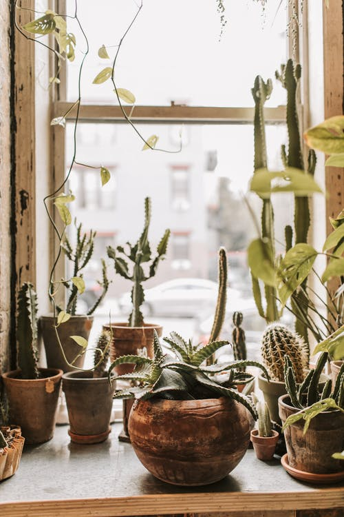 Windowsill with various potted plants on daytime