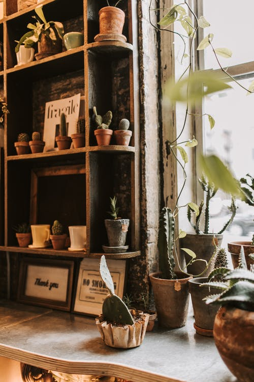 Wooden shelves filled with assorted green plants in shabby ceramic pots near window on daytime