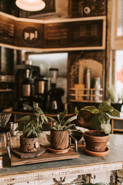Interior of rustic cafe decorated with plants