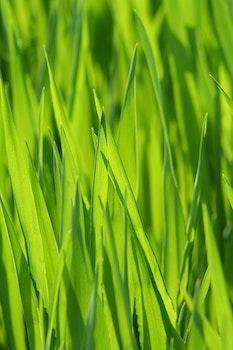 Free stock photo of nature, grass, blur, macro