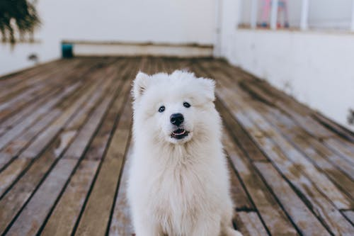 Fluffy dog on wooden terrace