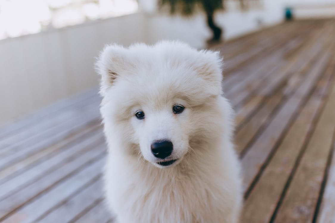 Shallow Focus Photo of White Long Coat Small