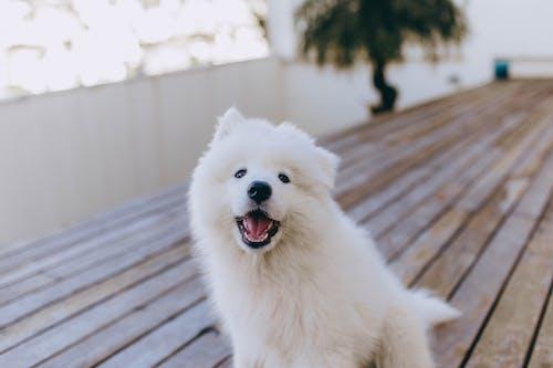 Happy fluffy dog on terrace