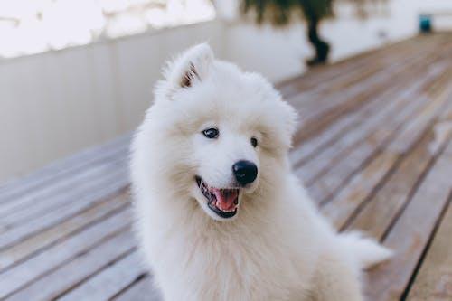 White fluffy dog on terrace