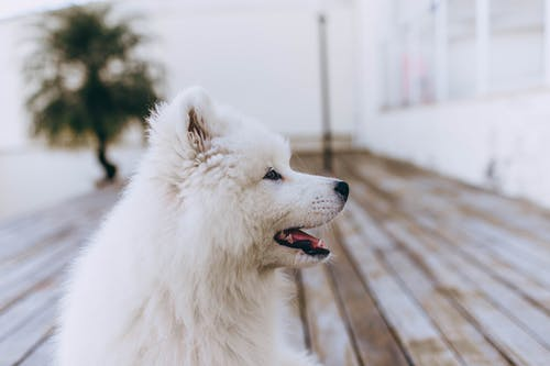Shallow Focus Photo of White Dog
