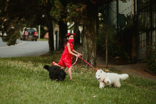 Photo of Girl in Red Walking With Her Dogs on Grass Field