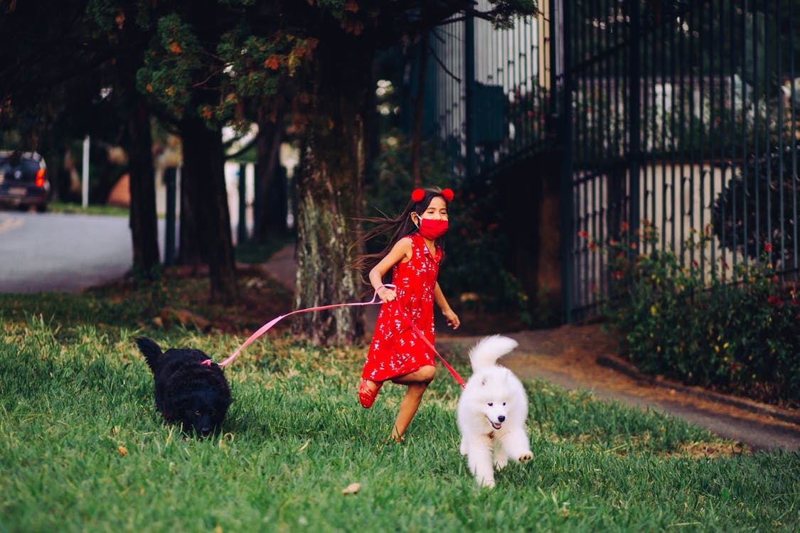 Cheerful child walking dogs in city