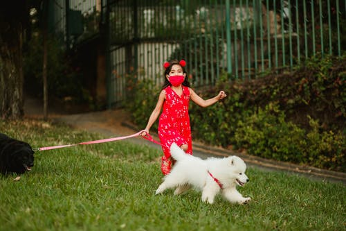 Adorable kid walking in park with dogs