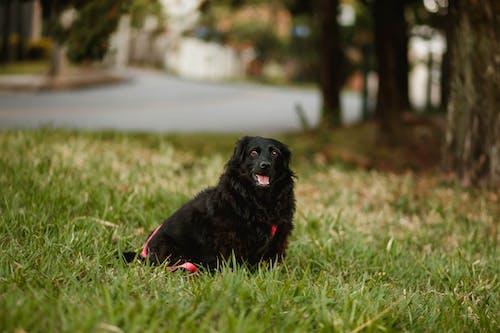 Black fluffy dog on lawn