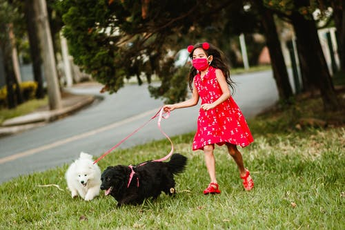 Cute child in medical mask running on green grass with fluffy dogs on leash while having fun together in city during coronavirus outbreak