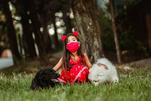 Child with obedient dogs in park