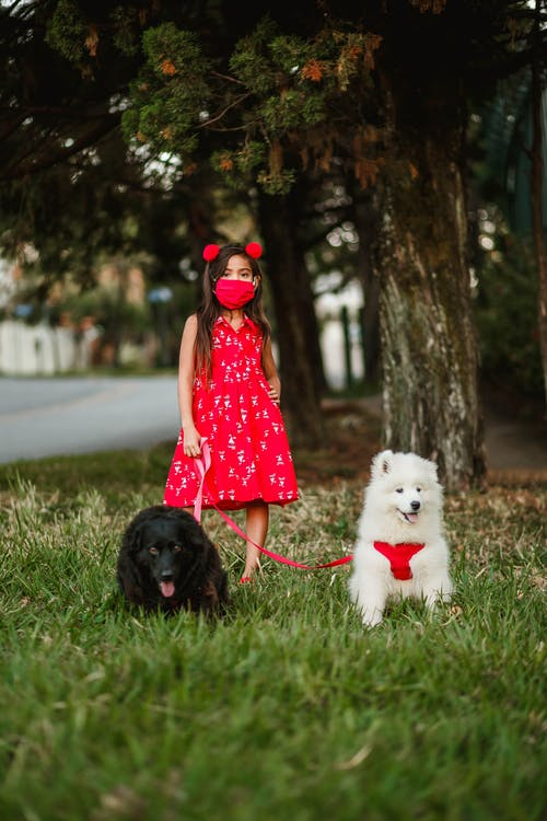 Child with charming dogs in park