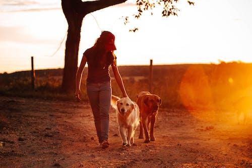 Photos gratuites de adulte, amour, amusement, animal de compagnie