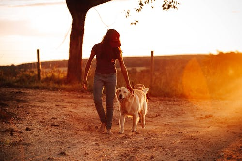 Ảnh lưu trữ miễn phí về bình minh, cát, chó, con gái