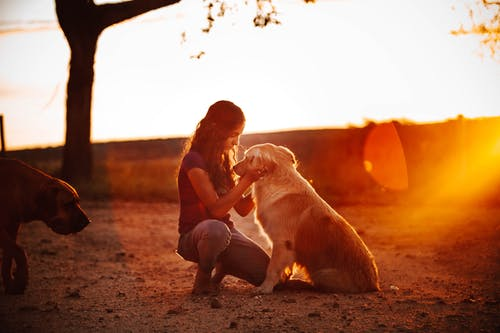 Photos gratuites de action, adulte, amitié, animal de compagnie