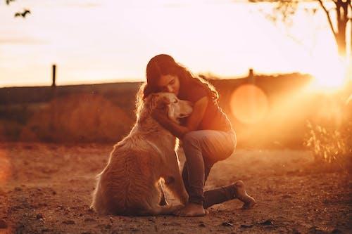 Photos gratuites de adulte, aube, automne, chien