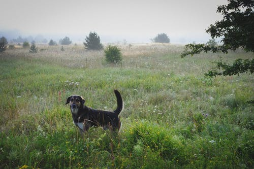 Free stock photo of dog, meadow, mist, morning