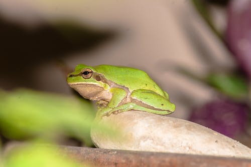 Free stock photo of at night, frog, green frog, tree