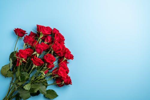 Kostnadsfri bild av arom, arrangemang, blå bakgrund, blad