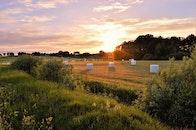 nature, sunset, field