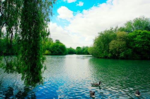 Ingyenes stockfotó kék ég, tó, welwyn kertváros témában