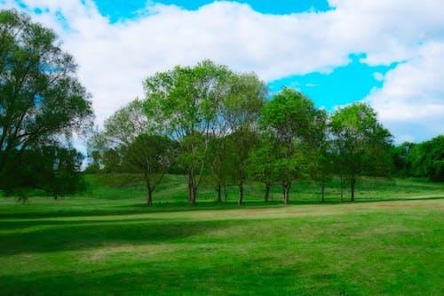 Foto profissional grátis de céu azul, céu de brigadeiro, interior, welwyn garden city