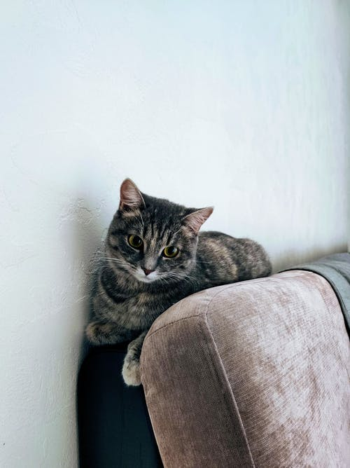 Adorable cat lying between wall and couch at home