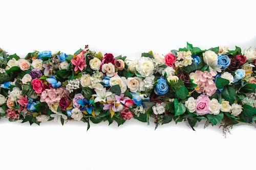 꽃, 나뭇잎, 낭만적인, 디자인의 무료 스톡 사진