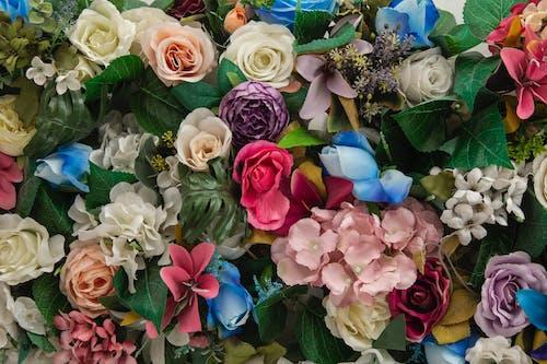 꽃, 나뭇잎, 낭만적인, 드라이플라워의 무료 스톡 사진