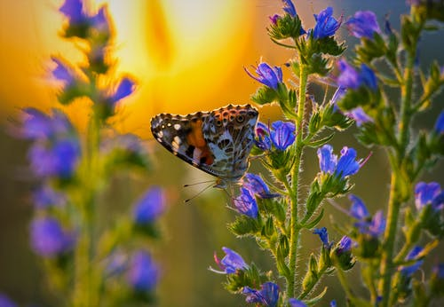 Butterfly with ornamental wings sitting on bright blooming blue flower on thin stalk in evening