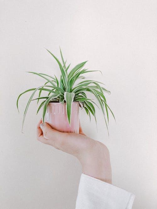 Aşk, büyüme, çiçek, dallanmak içeren Ücretsiz stok fotoğraf