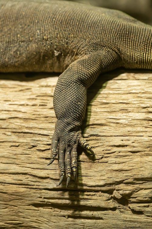 Leg of crocodile resting on tree trunk