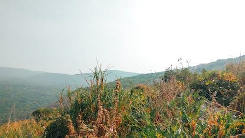Foto profissional grátis de chandan suman, fundo da montanha, grama, montanha