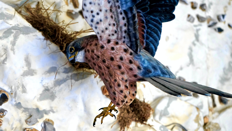 Gratis lagerfoto af close-up, dybde, dyr, dyrefotografering