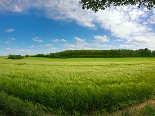 Foto profissional grátis de câmera gopro, campo inglês, campos agrícolas, céu azul