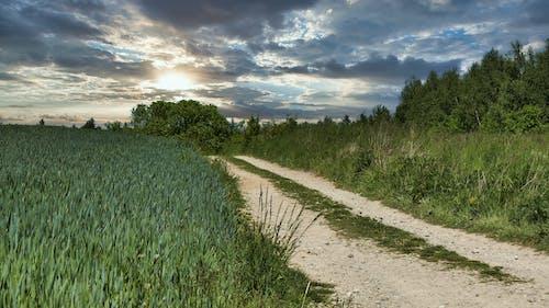 Free stock photo of krajobraz, laka, niebo