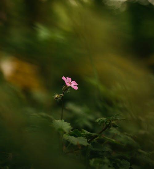 Foto profissional grátis de ao ar livre, aroma, aromático