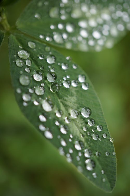 Green plant leaf covered with dew drops
