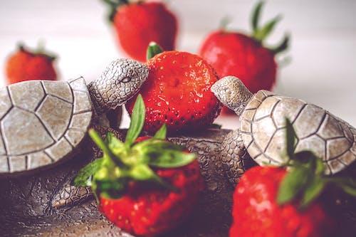 Gratis stockfoto met aardbeien, beeldje, bijten, dineren