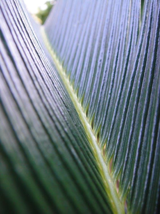 Free stock photo of green, macro, nature