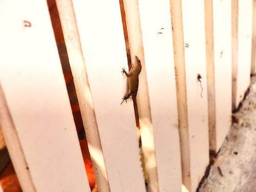 Free stock photo of animal, exotic, florida