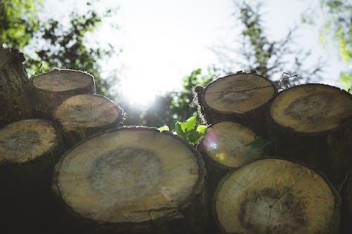 Foto profissional grátis de árvore, árvores, céu, ecológico