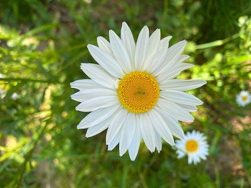 Free stock photo of beautiful, beautiful flower, botanic